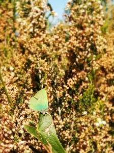 Across France and Italy in Liguria – Sampling Butterflies #1